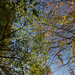 Botanic Gardens Edinburgh Oct 2017 -81