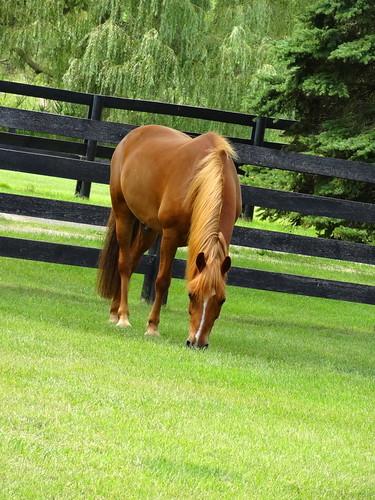pony 235 (1)