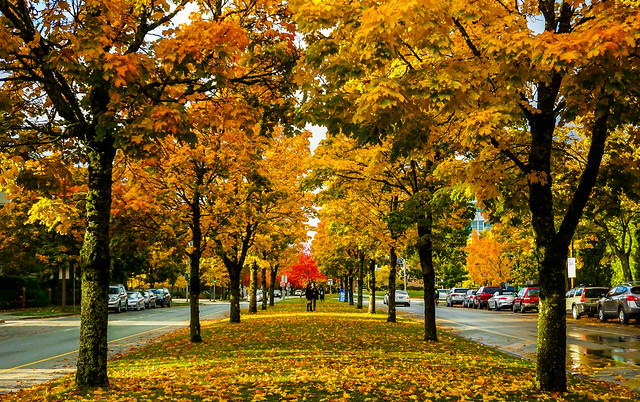 Fall colors Vancouver