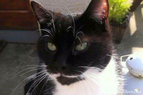 Fri, Oct 13th, 2017 Lost Male Cat - Steeplechase Green, Ratoath, Meath