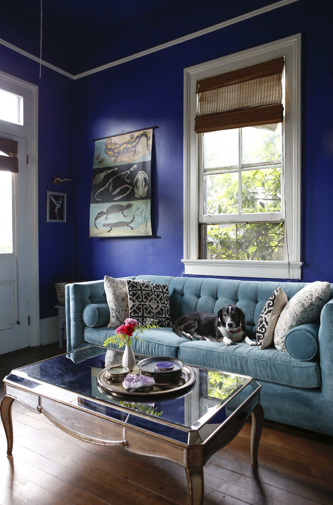 Royal Blue Wall Paint Living Room Sky Blue Velvet Couch Jewel Tones