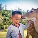 TAIWAN-綠島-梅花鹿-兒童