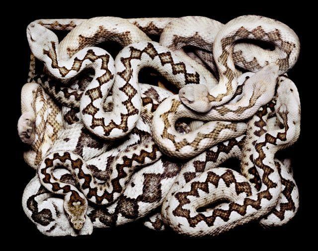 snake_art_07