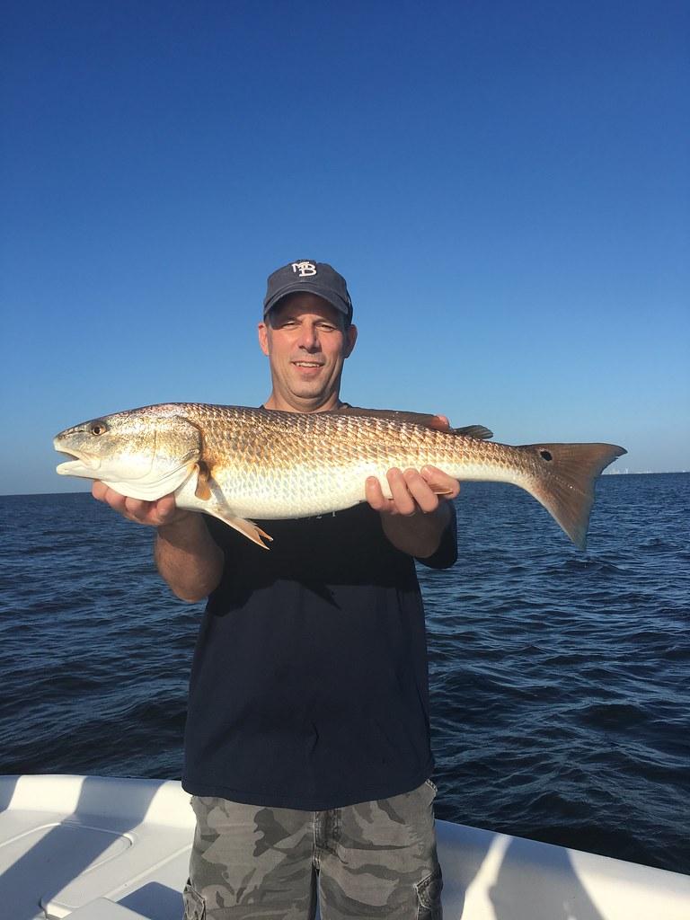 Redfish Tampa Bay