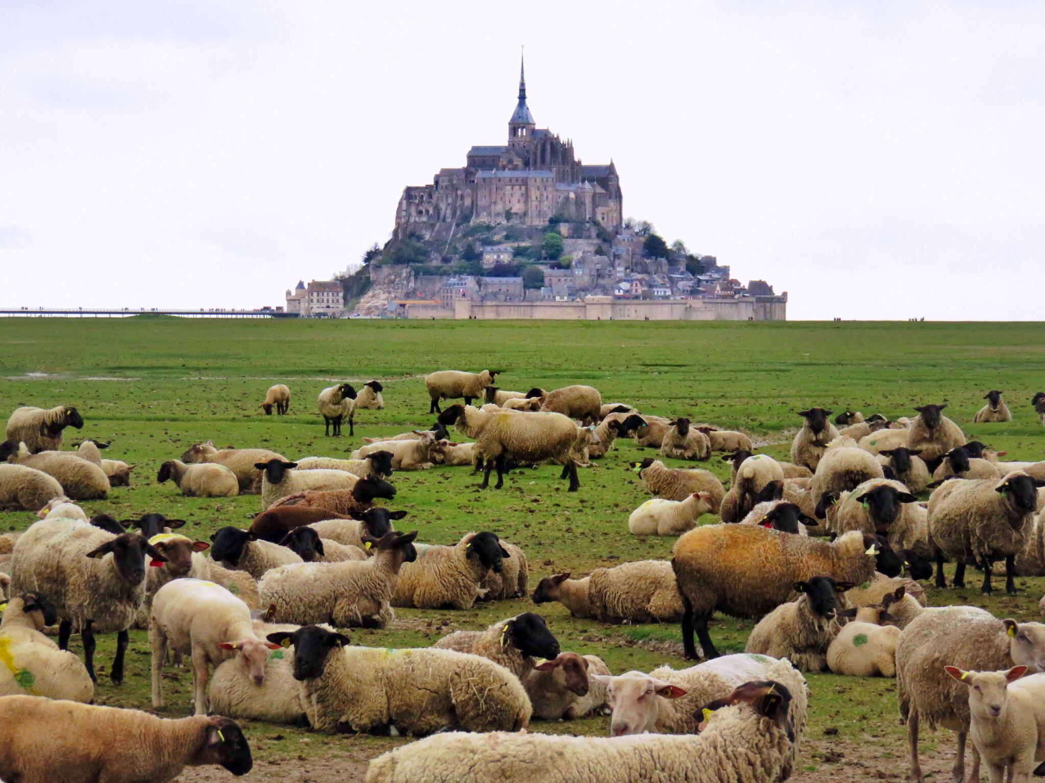 Mont Saint-Michel, France / Monte Saint-Michel, Francia mont saint-michel - 37008160574 0cbee638cf k - Visitar el Mont Saint-Michel