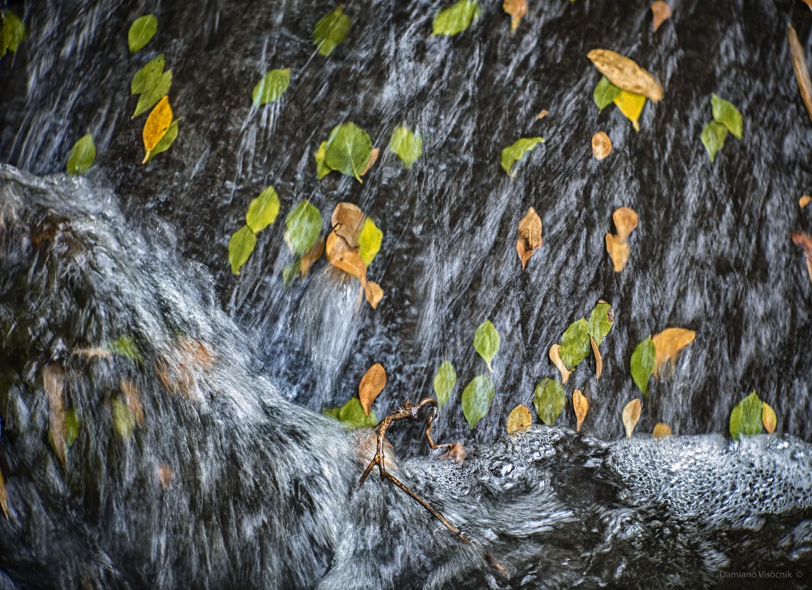 leafy cascade
