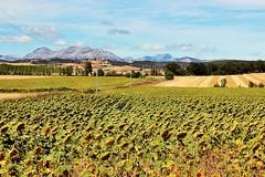 Countryside Landscape near Palencia #2