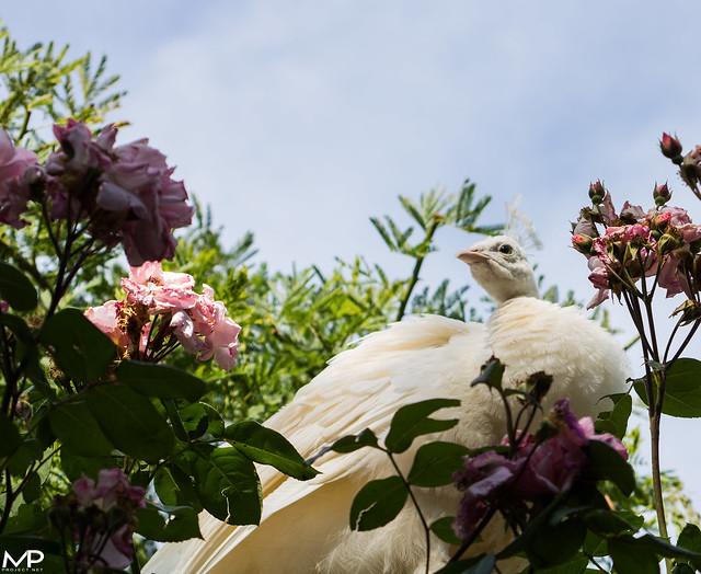 Vanity Pose*, Canon EOS 750D, Canon EF 55-200mm f/4.5-5.6 II USM