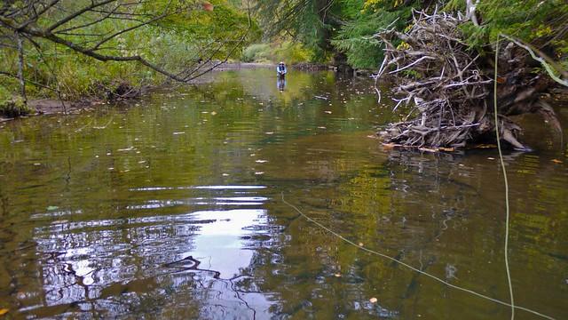 Moosehead on the Kettle Creek