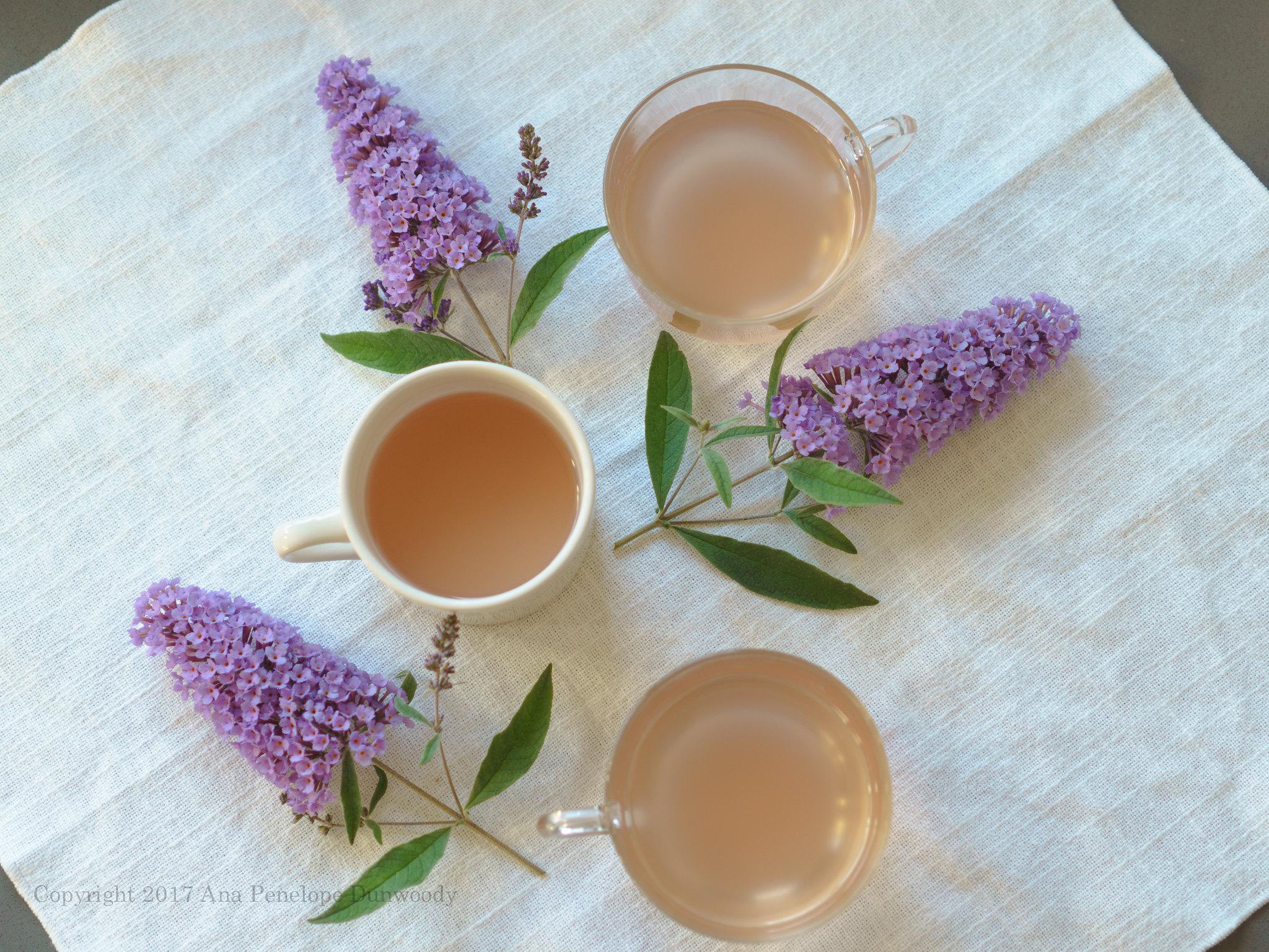 Maelsilcha (Plum Tea)