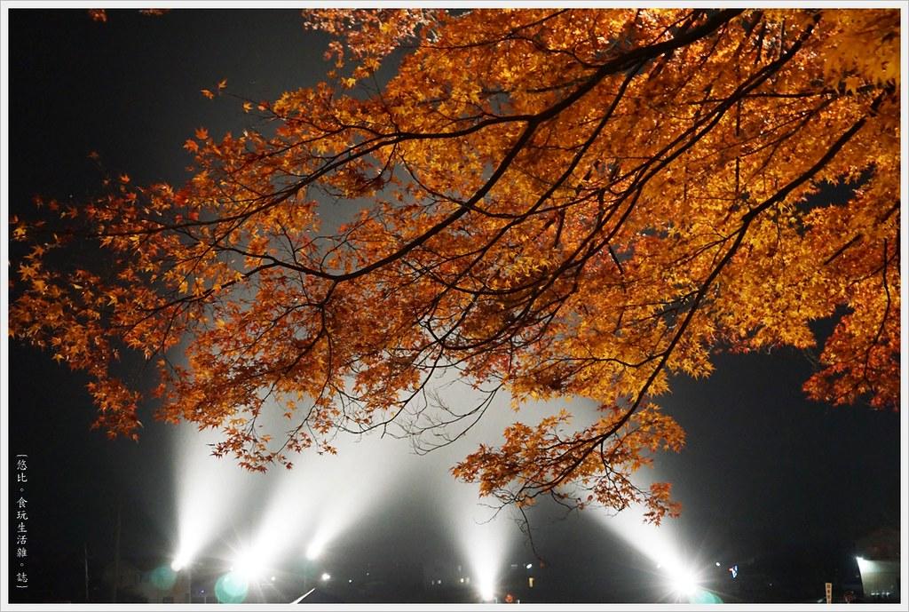 紅葉迴廊-紅葉祭-夜楓-19