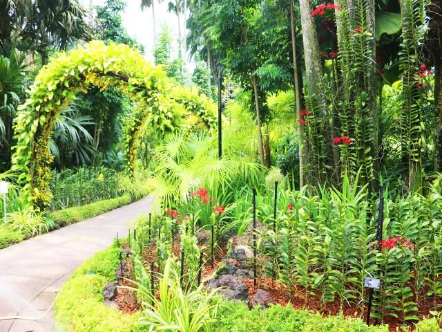 gradina orhidee Gradini si Parcuri din Singapore 2