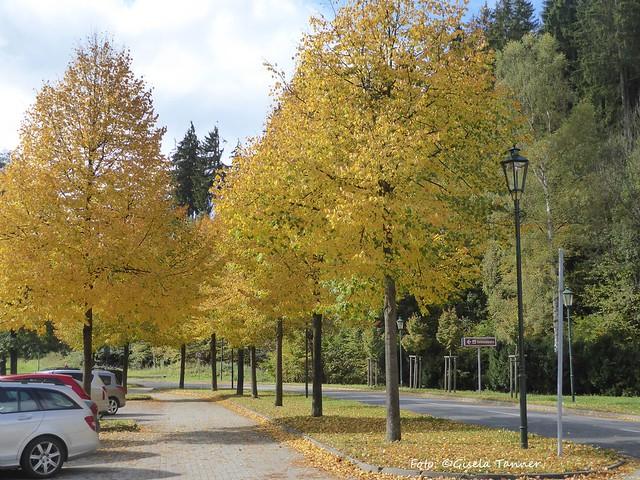 Harzreise - Alexisbad