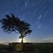 Magic Tree Star Trails 🌌