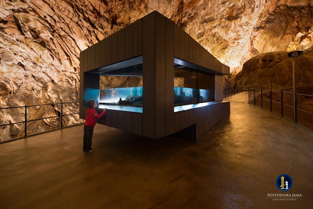 Postojna Cave 039 Iztok Medja for Postojnska jama