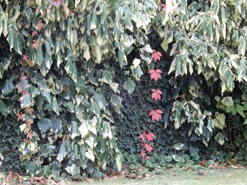 tumbling vines
