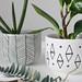 Diy Home : DIY Mini Planters -wonderwood...