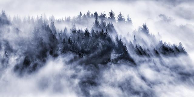 The Magic Mists