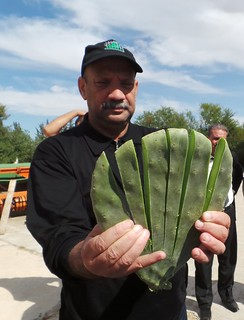 Thu, 10/19/2017 - 13:19 - Mr Fethi Gouhis (Director at OEP HQs) holding a sliced spineless cactus pad.