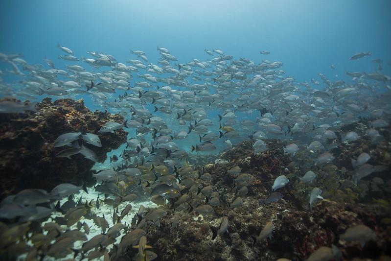 diving (41 de 77)