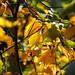 Botanic Gardens Edinburgh Oct 2017 -57