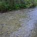 Indian River Salmon Run
