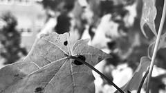 Hiding Ladybug II