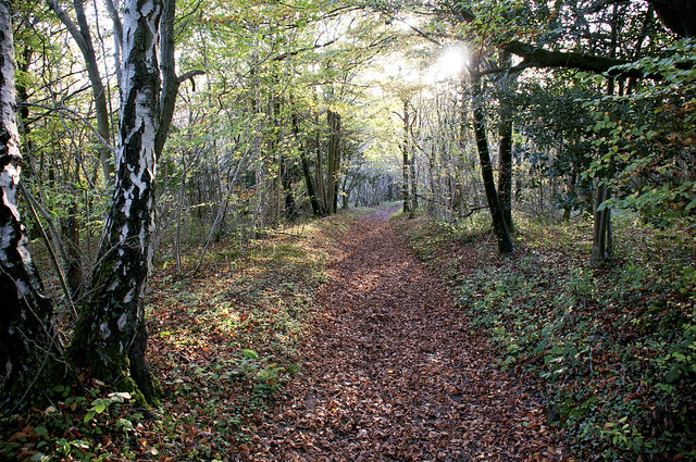 Dorvel Wood