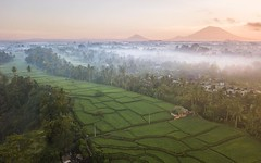 Got up before the sunrise and trekked out up a ridge along the rainforest jungle. As the sun rose I got this early morning fog and rice field shot with Mt Agung #Volcano in the background. Luckily this was just before the alert level was raised. Pretty ha