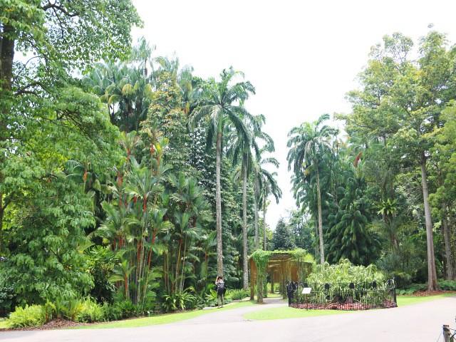 gradina botanica Gradini si Parcuri din Singapore 4