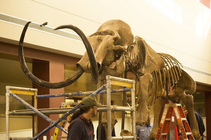 Woolly Mammoth Arrives