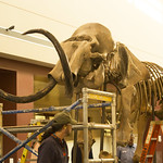 Holy Woolly Mammoth!