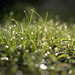 Dew on the grass by Kapitalist63