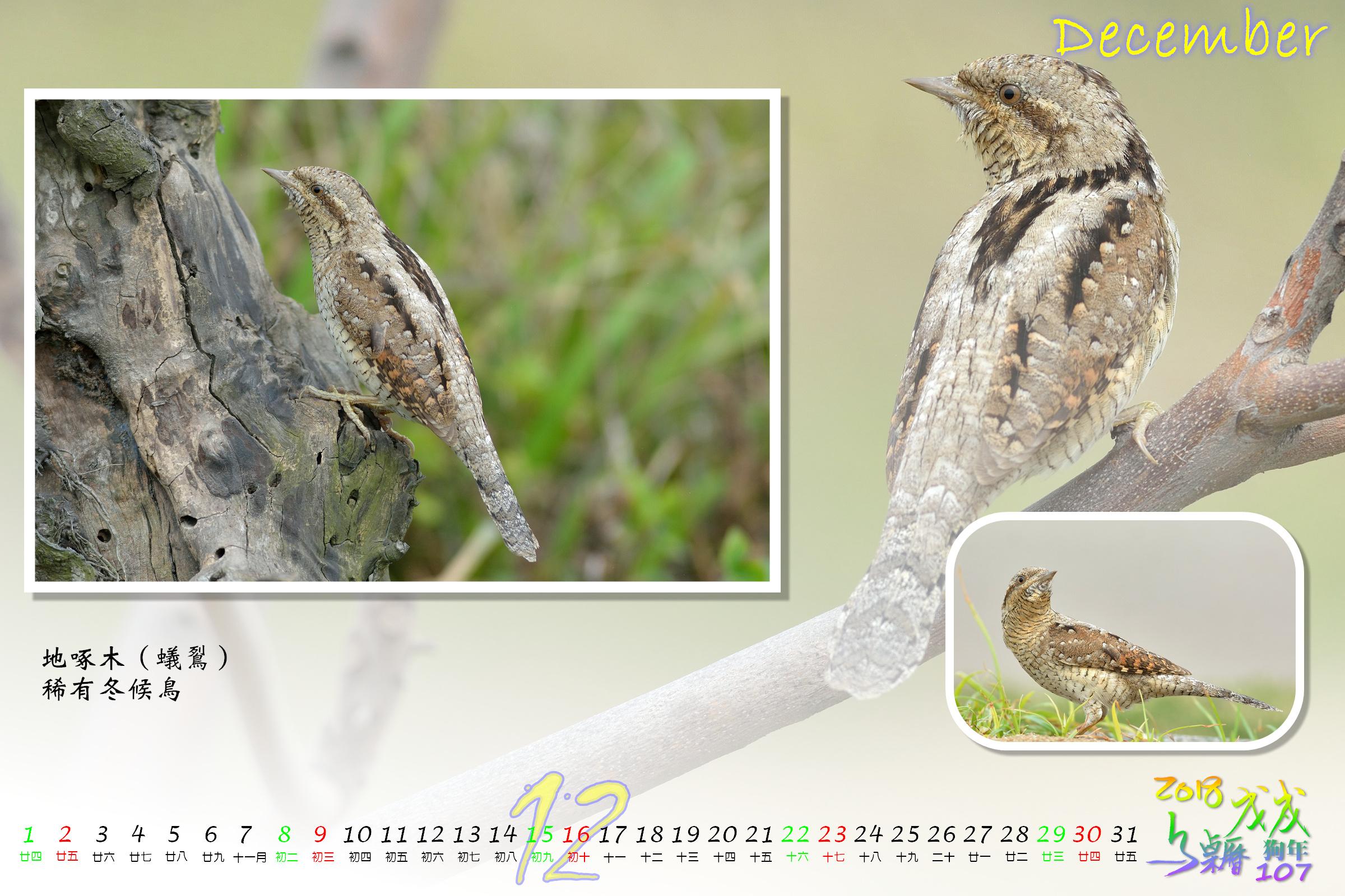 Calendar2018_Alder2_12
