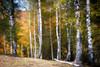 Autumn Landscape by WhiteShipDesign