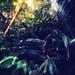 Dark forest #37 by Saraia77