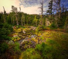 Nortwest Scottish Lakes Landscape