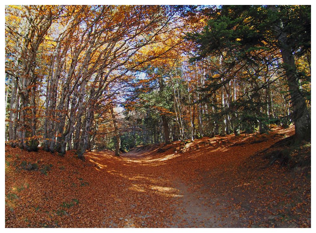automne parc du Pilat