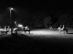 Cowgirl spotlight