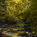 Creek and Foliage, Autumn (Fall Colors) #2
