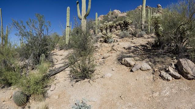 DSC2496a6000a Saguaro National Park ©2017 Paul Light