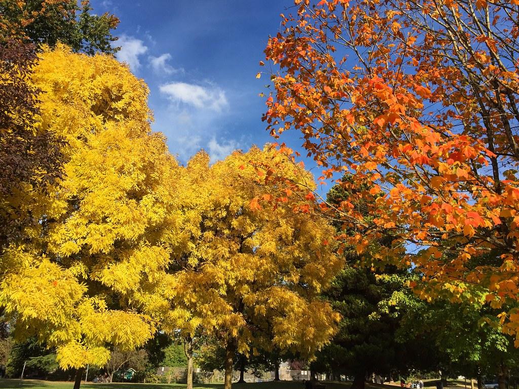 Autumn in Vancouver.... 🍁 #thanksgiving #october #fallcolours #eastvan #autumninvancouver