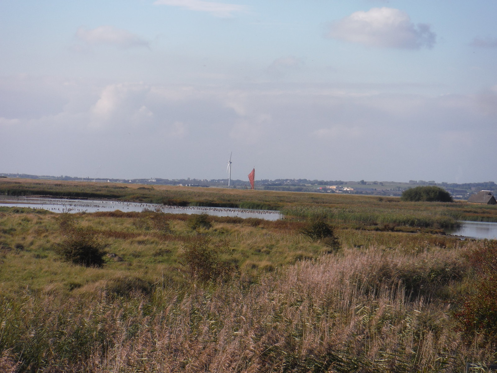 Thames Barge on Horizon, Oare Marshes Nature Reserve SWC Walk 299 - Teynham to Faversham