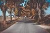 Autumn road by Norbert Osiecki