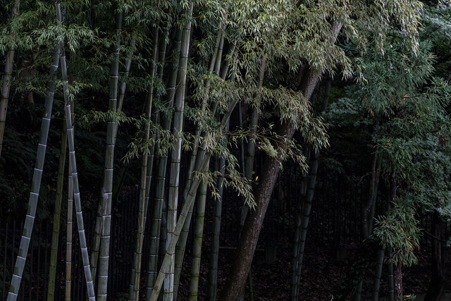 Ooiso Photo walk