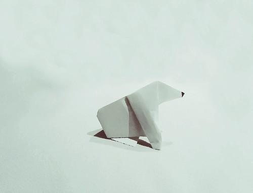 Polar bear in polar place. Ursus maritimus
