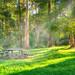 Sheoak Picnic area