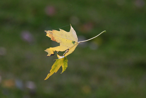 IMG_10968_Leaves_Caught_in_Web