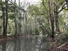 La rivière La Dive - Photo of Sainte-Soline