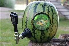 Watermelon fish tank / Wassermelonen-Aquarium